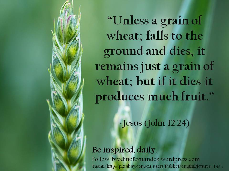 Unless a seed falls to the ground and dies