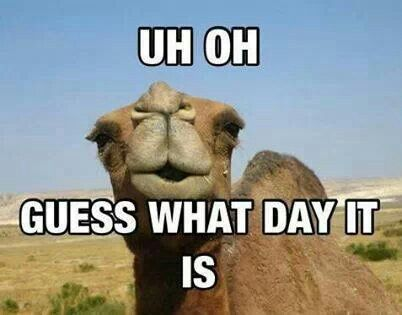 Mike mike mike guess what day it is