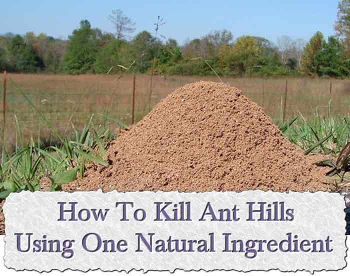 How to get rid of an ant hill