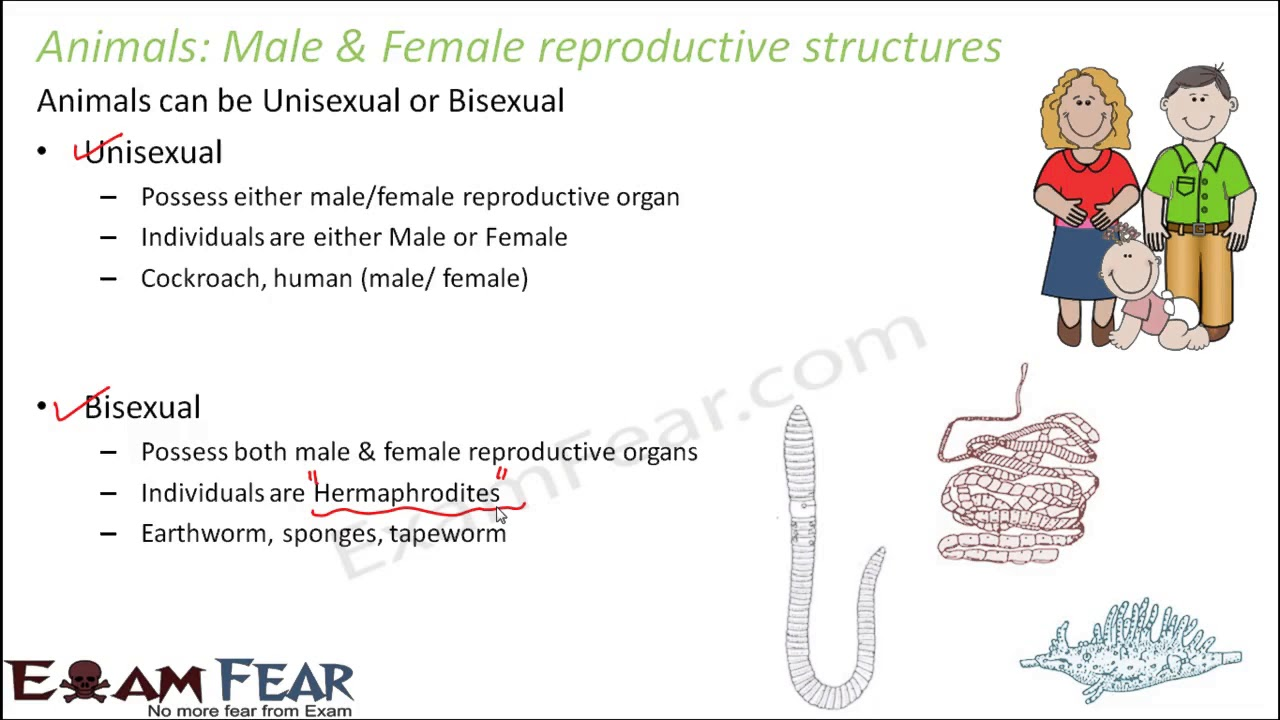 Animals that possess both male and female sexual organs