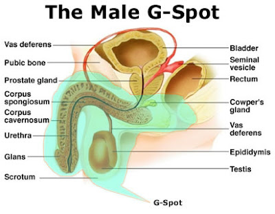 Where is a mans gspot