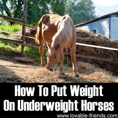 How to put weight on a horse