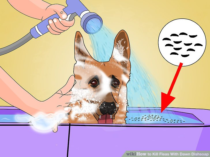 Is dawn dish soap good for fleas on dogs
