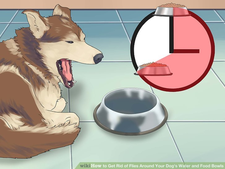 How to keep flies away from dogs
