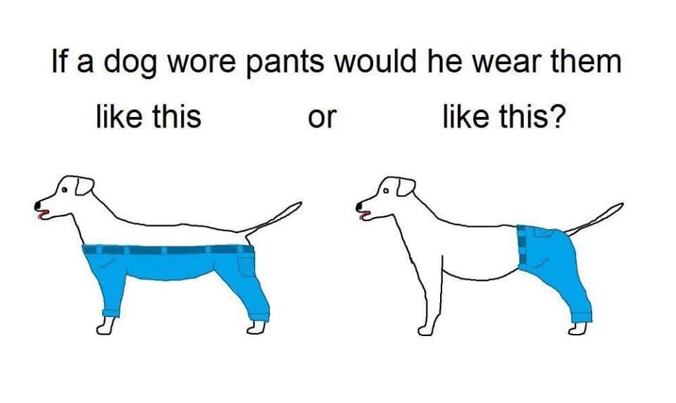 If dogs wore pants