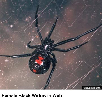 What do you call a male widow