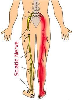 What is the longest nerve in the body