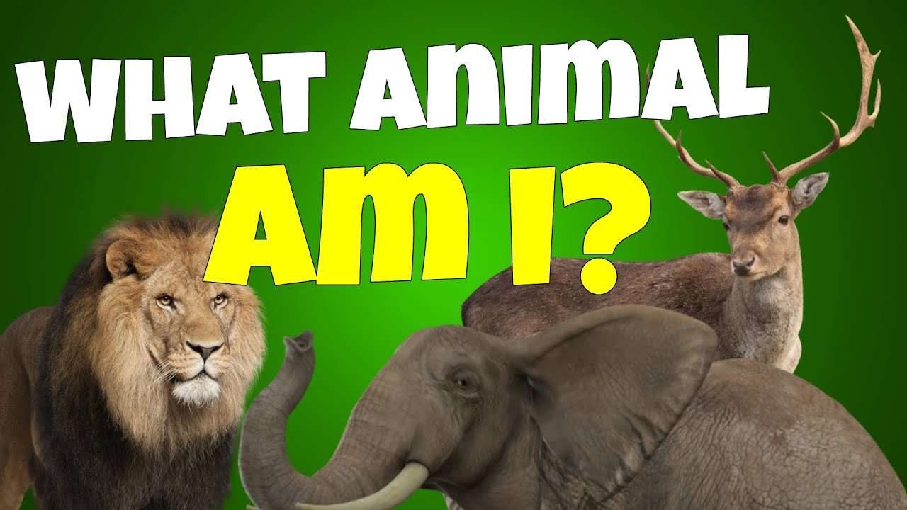 What kind of animal would you be